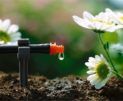 Tưới nước cho cây ăn trái ở Tiền Giang trong bối cảnh biến đổi khí hậu